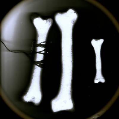 3 Ceramic Bones