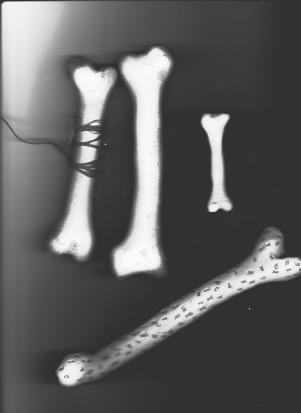 4 Ceramic Bones