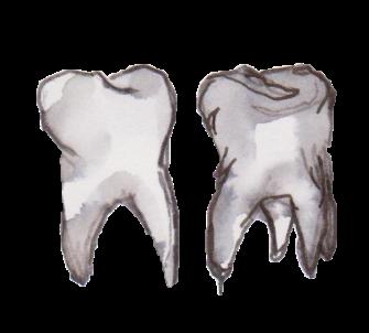 teeth2017T